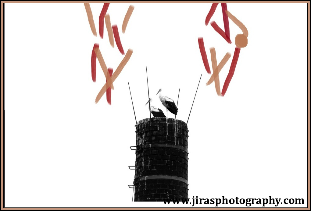 Kacice Capi trable 2017 jiras www.jirasphotography.com