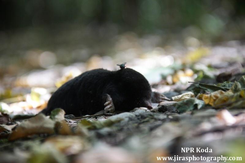 NPR Koda foto Tomas Jiras (11)