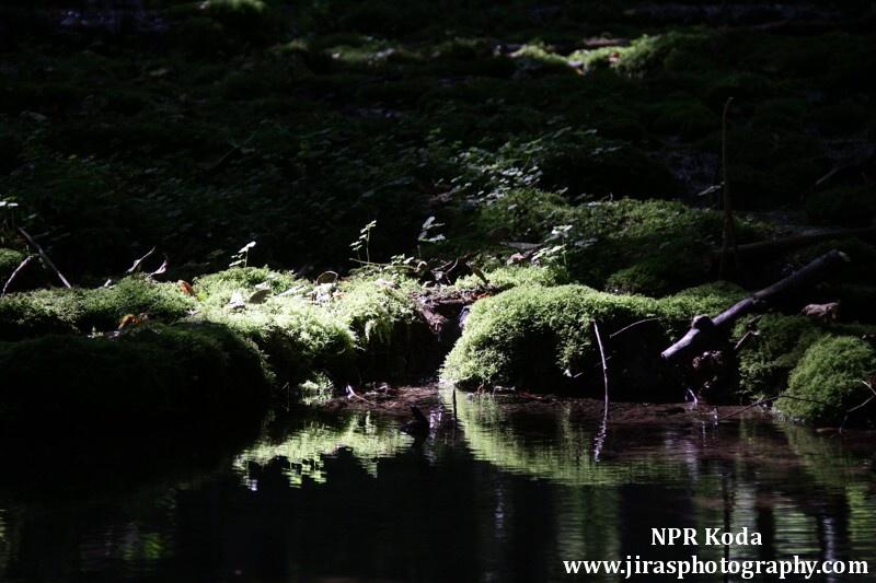 NPR Koda foto Tomas Jiras (16)