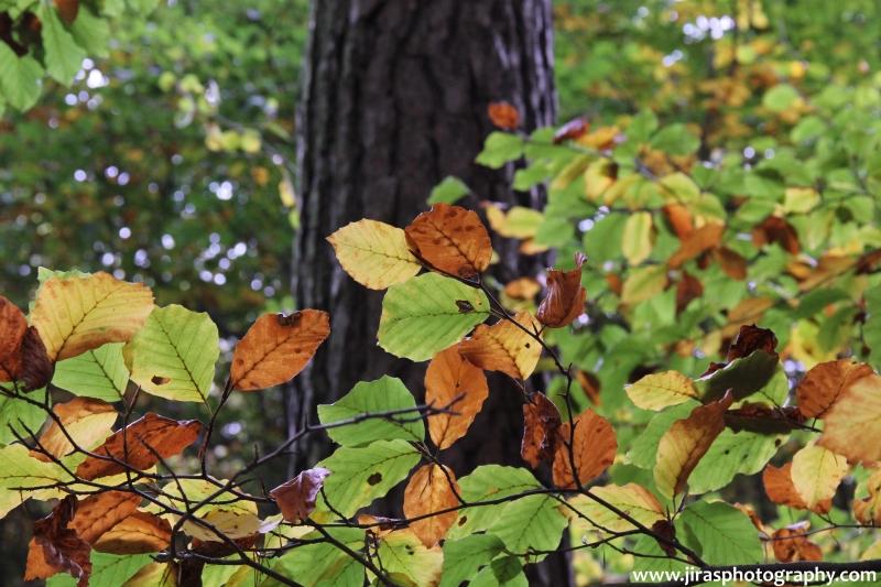 Barvy podzimu 2014 (3)