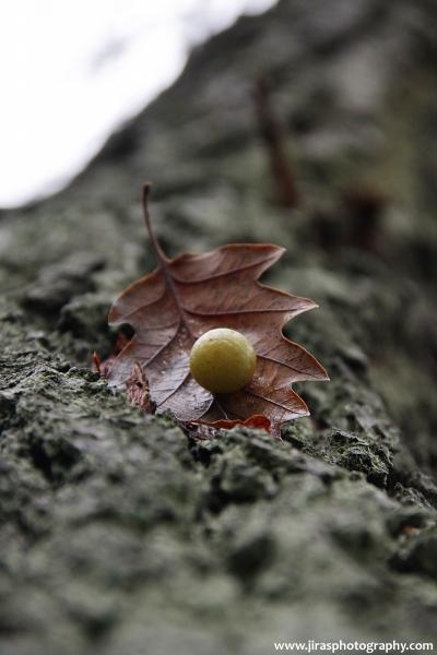 Kulička na listu