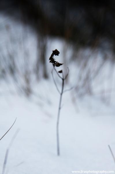 V zimě na louce