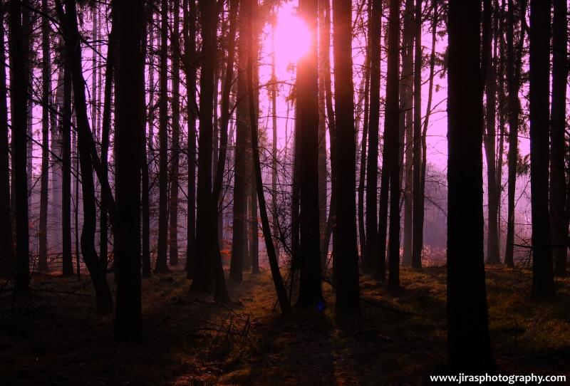 Západ v lese 2014