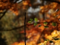 Listy podzim 2014 (1)
