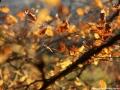 Listy podzim 2014 (2)