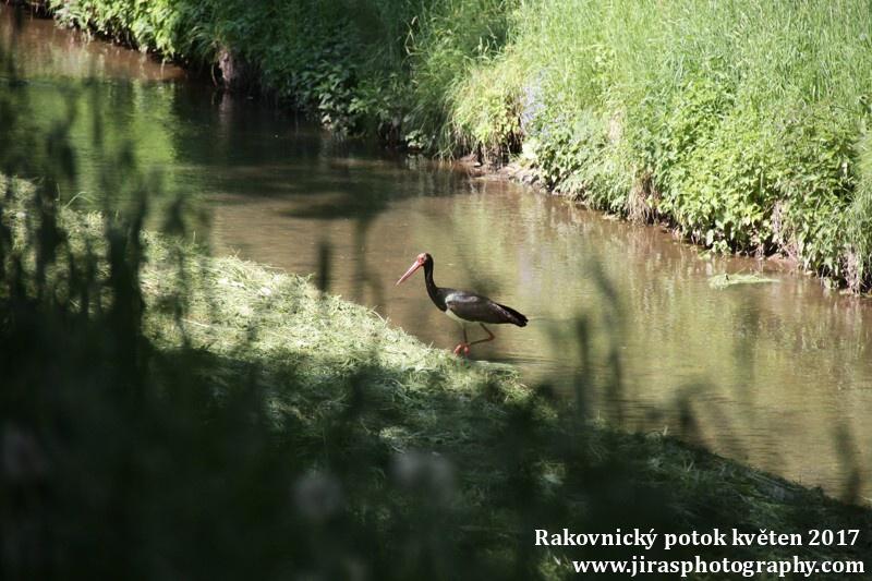 Rakovnický potok, Pustověty Tomáš Jiras (11)