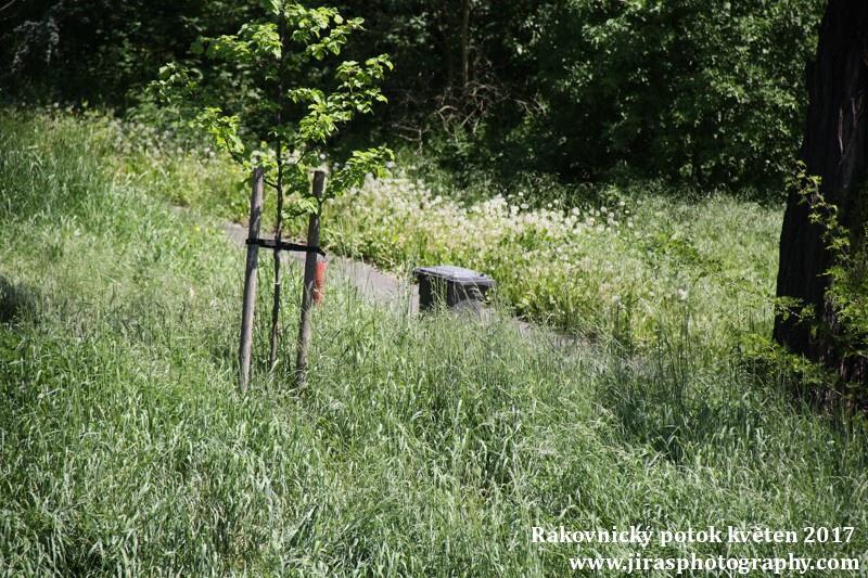 Rakovnický potok, Pustověty Tomáš Jiras (25)