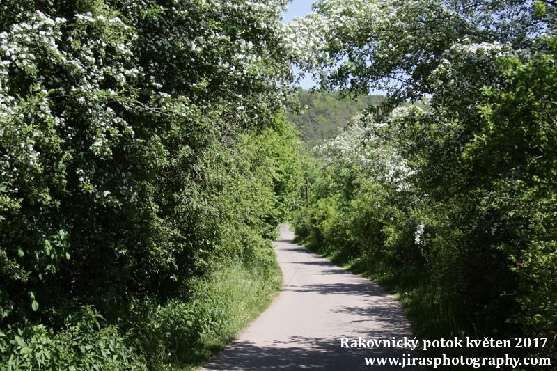 Rakovnický potok, Pustověty Tomáš Jiras (43)