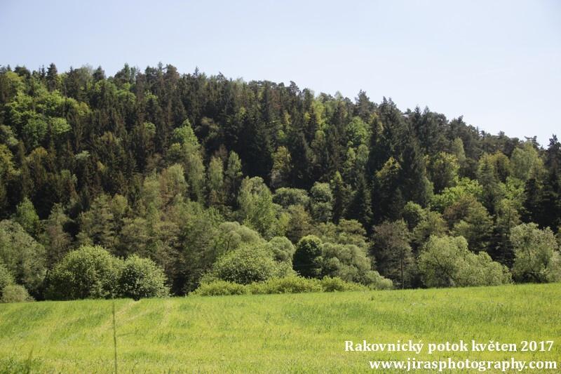 Rakovnický potok, Pustověty Tomáš Jiras (46)