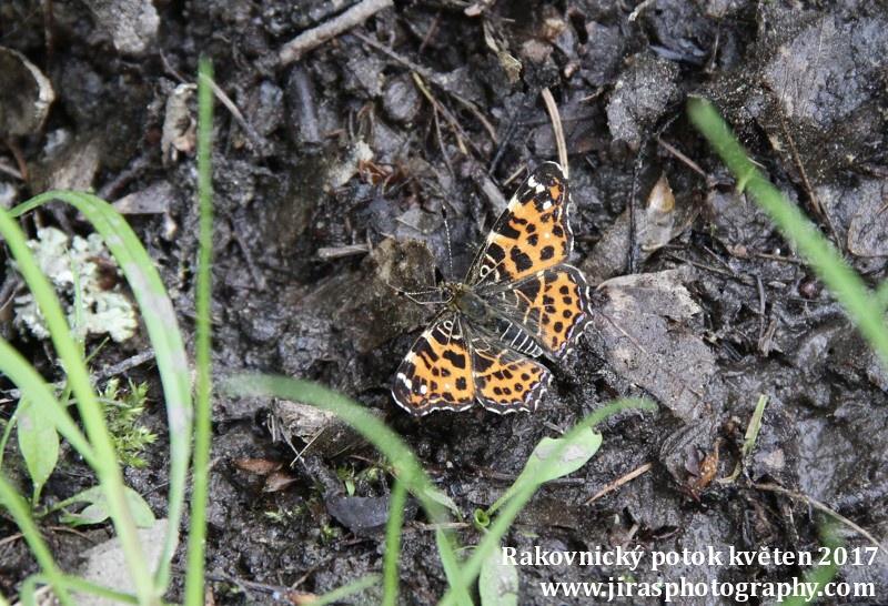 Rakovnický potok, Pustověty Tomáš Jiras (69)