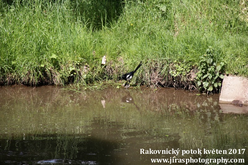 Rakovnický potok, Pustověty Tomáš Jiras (73)