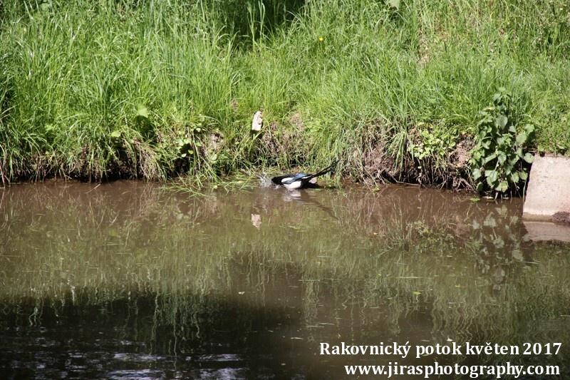 Rakovnický potok, Pustověty Tomáš Jiras (74)