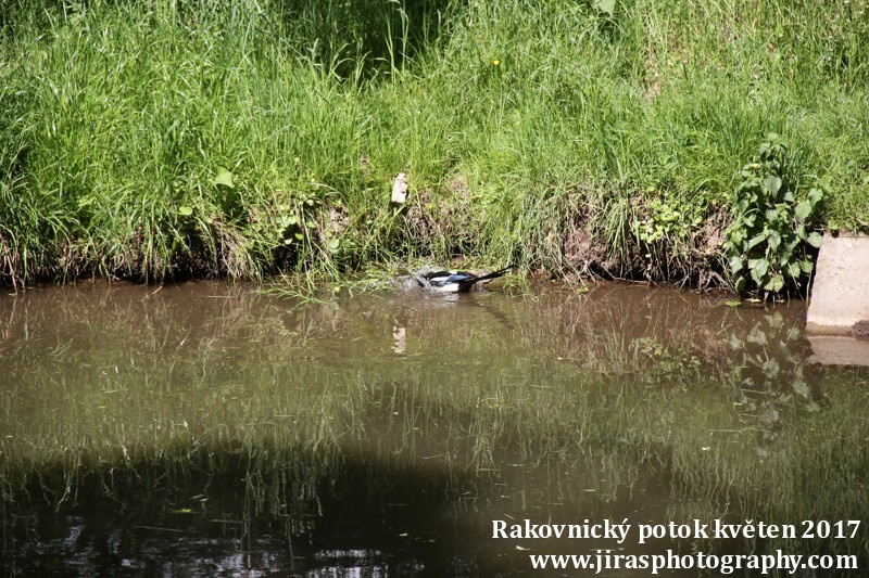 Rakovnický potok, Pustověty Tomáš Jiras (76)