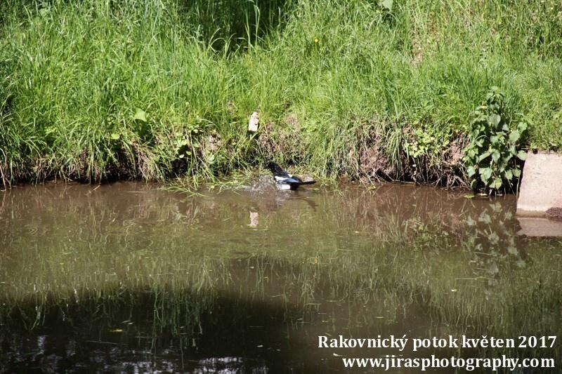 Rakovnický potok, Pustověty Tomáš Jiras (77)