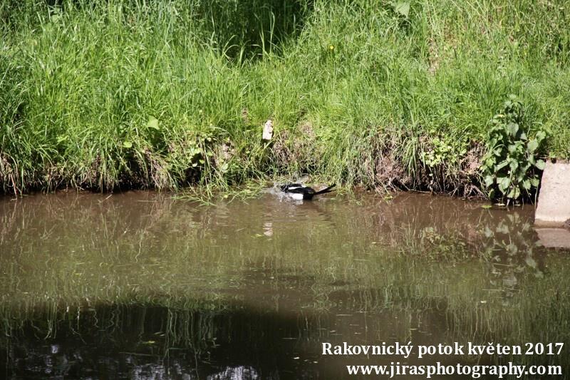 Rakovnický potok, Pustověty Tomáš Jiras (78)