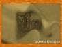 Sambara fotomorf víčka objektivu
